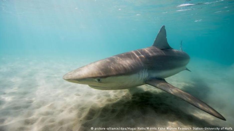 Το Ισραήλ, «τζακούζι» για καρχαρίες